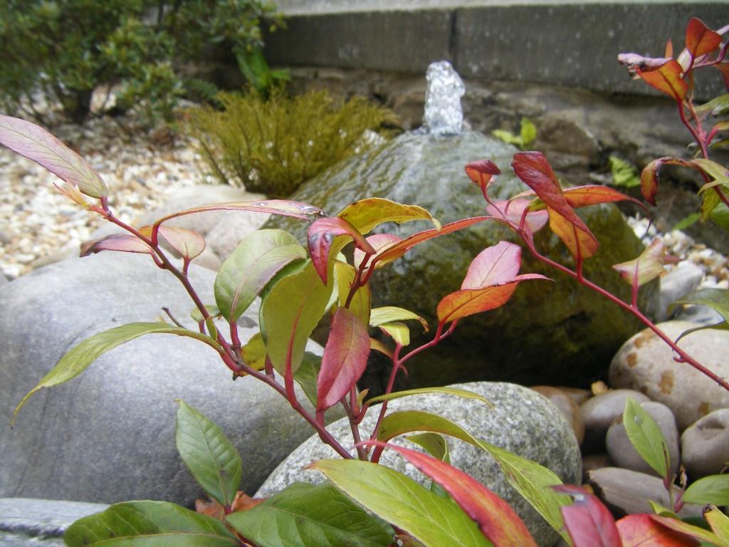 AmarAgua-Garden